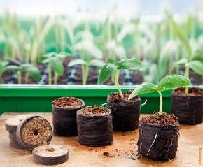 Aussaatkalender 2019: Was müssen Sie wann pflanzen? #tomatenzüchten