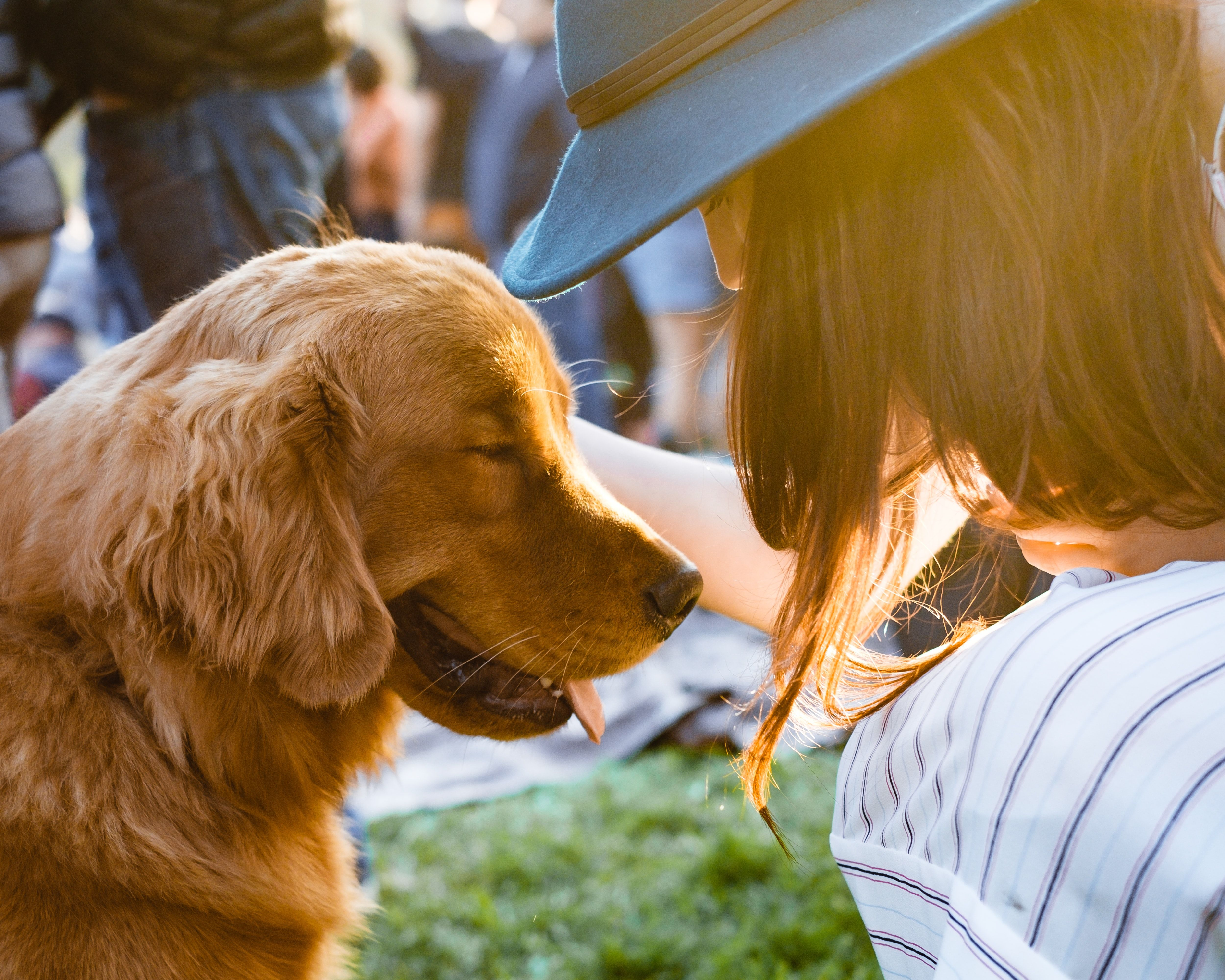 Train Your Dog With 21 Games Free In 2020 Best Pets For Kids Therapy Animals Dogs