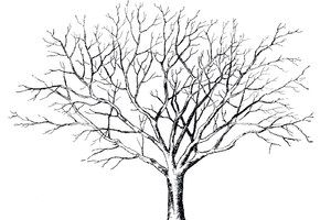 Tree With No Leaves Drawing Coloring Page Of A Tree Without Leaves 1600x1276px 23384 Tree Drawing Tree Graphic Tree Sketches