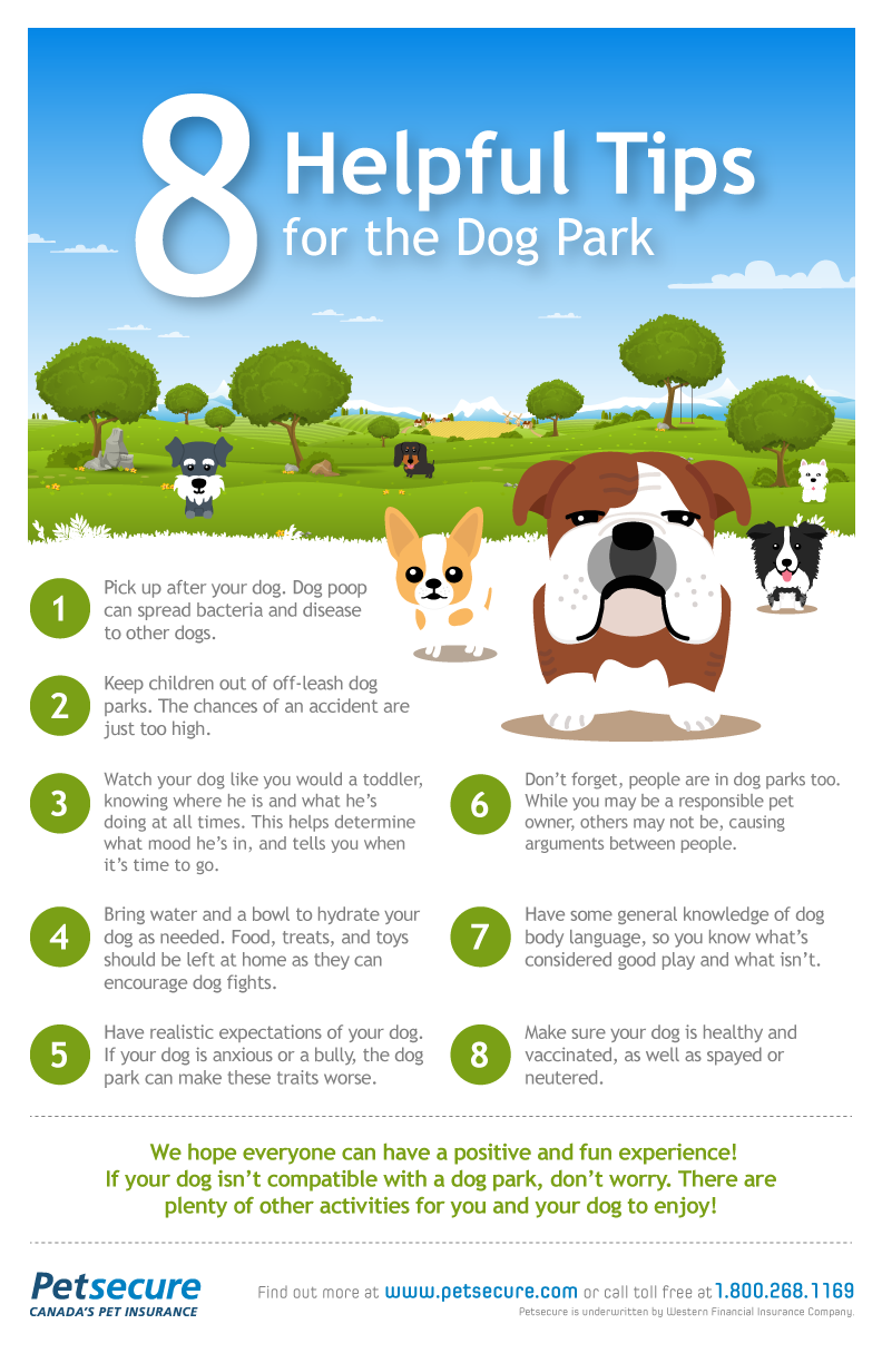 We Love This Dogpark Infographic From Petsecure Very Good