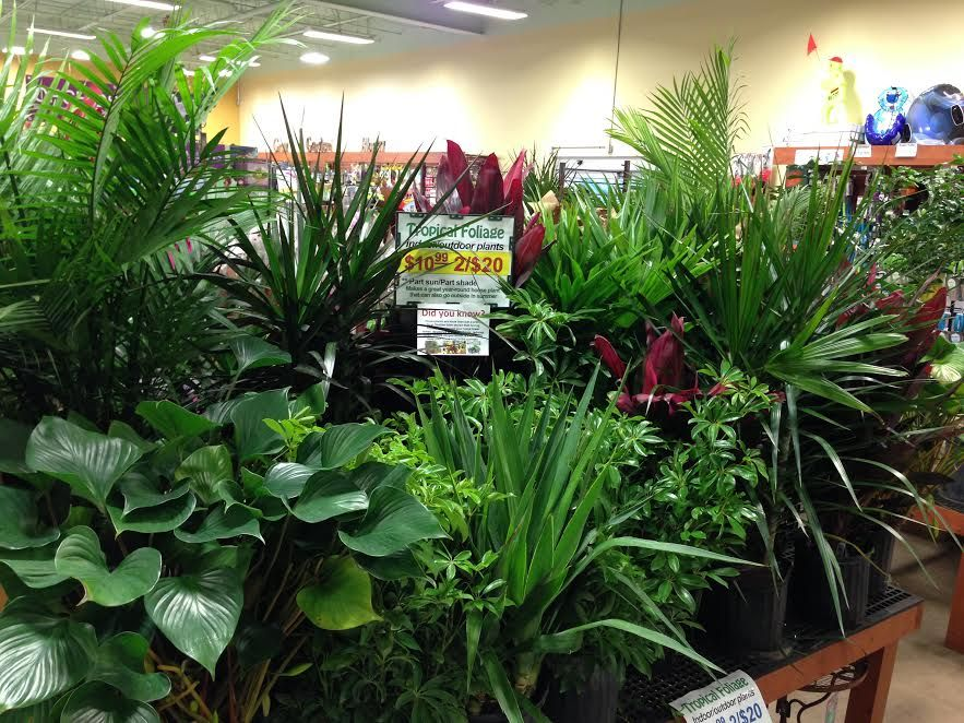 indoor gardening fairless hills garden center - Fairless Hills Garden Center