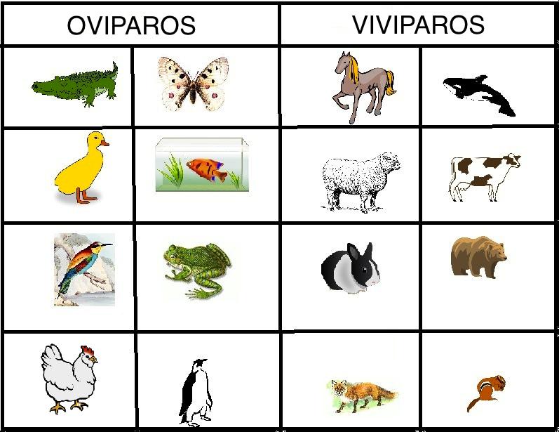 Aprendiendo De Los Animales Vivíparos Y Ovíparos Actividades