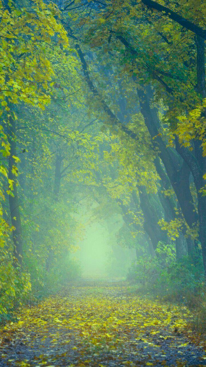 Nature Best Background Images Dslr Background Images Photo Background Images