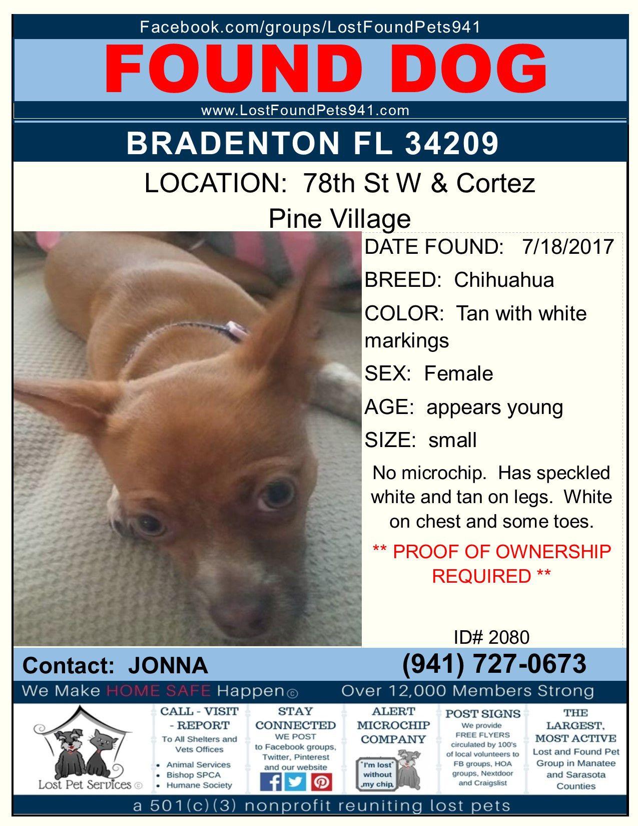 Do You Know Me Found Dog Missingpets Bradenton 34251