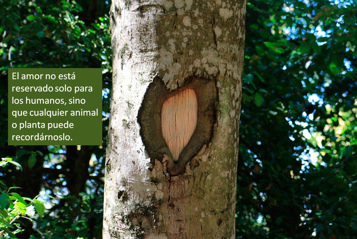 Cualquier ser puede recordarnos el Amor para el que hemos sido creados - @EscuelaLemat ➜bit.ly/Aprende-Tarot
