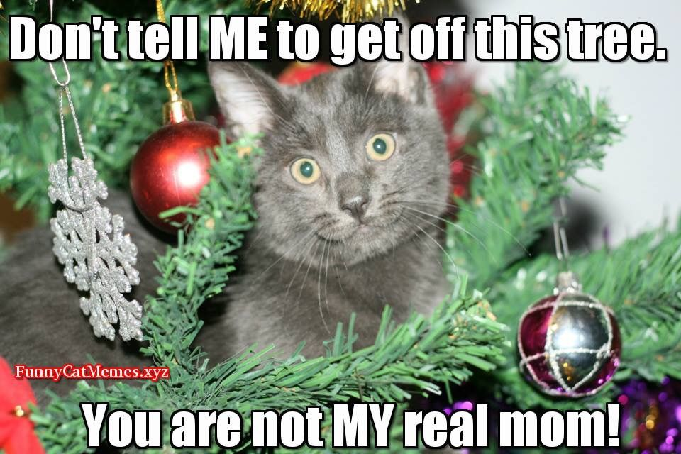 Pin by Lethally Blonde 007 on Christmas Merry christmas