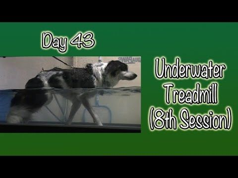 Day 43: Underwater Treadmill (8th session) - YouTube