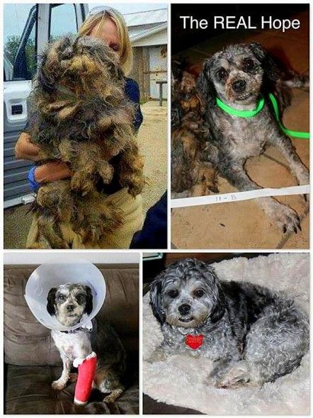 Dog Rescued Adopted After Years Of Neglect At Puppy Mill My Name Is 109 I Have Lived In A Puppy Mill For 6 5 Years I Have Puppy Mills Rescue Dogs Puppies