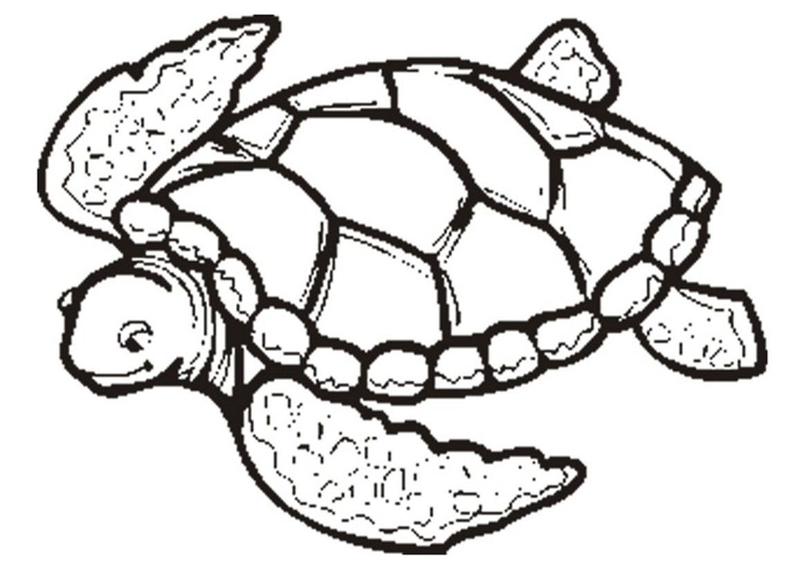 Free Printable Turtle Coloring Pages For Kids Animal Coloring