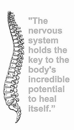 spine coloring pages