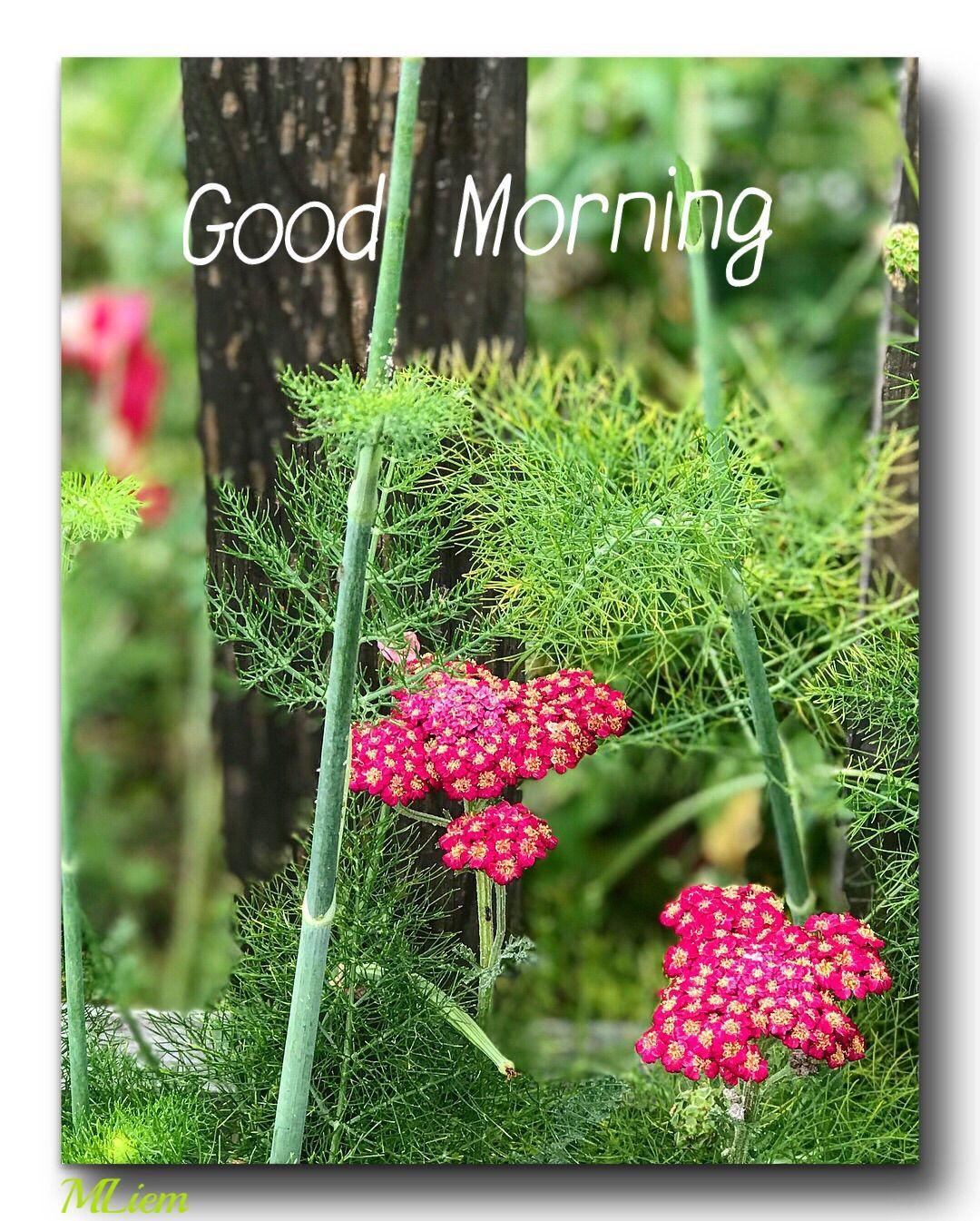Pin by Fakhruddin Jiwakhan on Greetings in English. Good