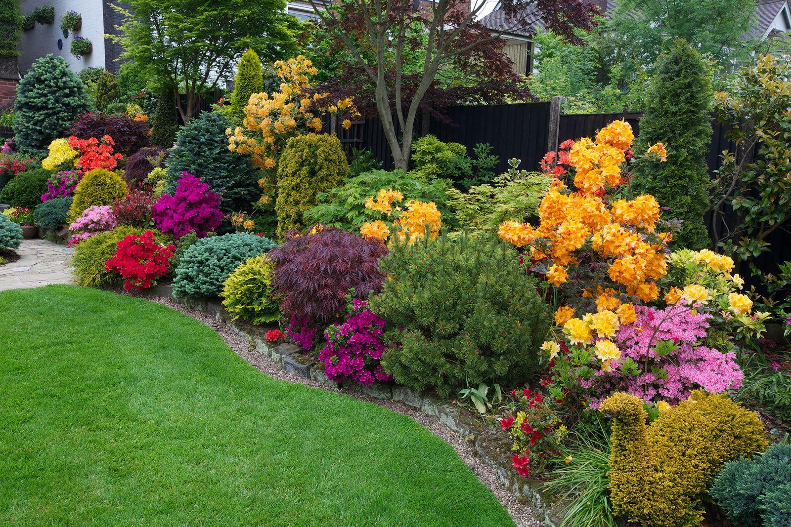 Side border late spring azalea flowers garden planning pinterest