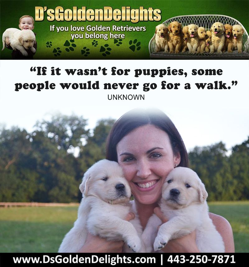 If It Wasn T For Puppies Some People Would Never Go For A Walk Unknown In 2020 Golden Retriever Dog Quotes Dogs