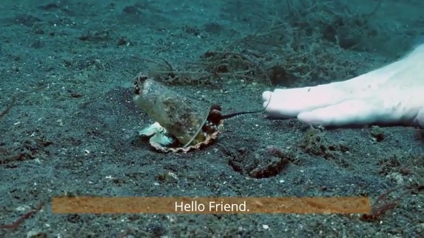 Helping the octopus