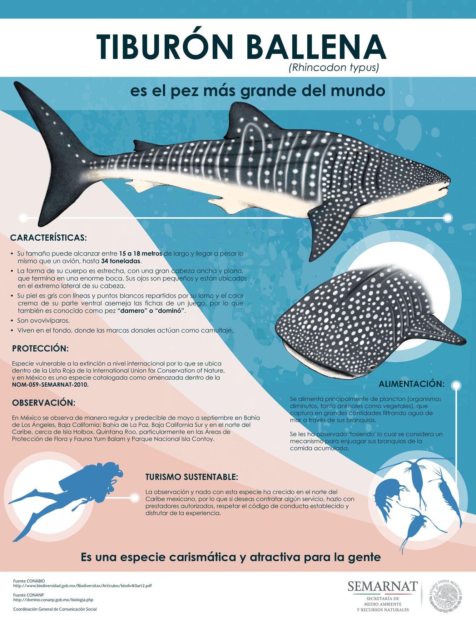 Resultado de imagen para como nacen los tiburones para niños ...