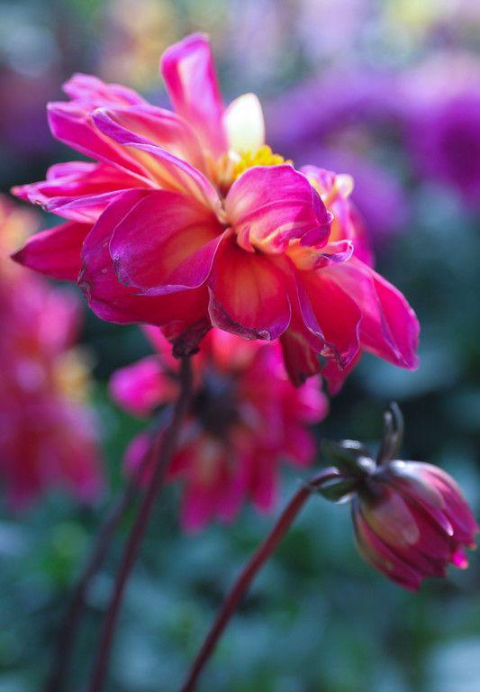 Perfect Pink ©Briana Lee Photography #flowerphotography #macrophotography #flower #macro #photography #stunning #beautiful #photographyideas #naturephotography #pink