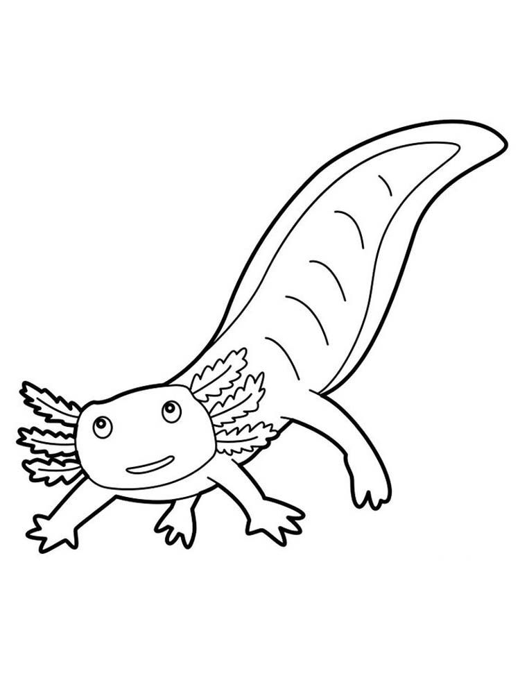 Salamander Coloring Pages Print Salamanders Are Amphibian And