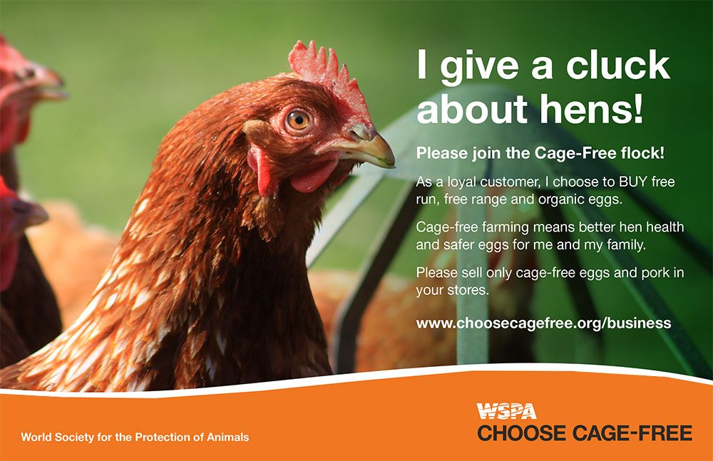 Hey there buycott this saturday buy cagefree eggs then