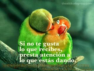 Lo Mejor De Todo Internet Si No Te Gusta Lo Que Recibes Pajaros Hermosos Imagenes De Pajaro Aves De Compania