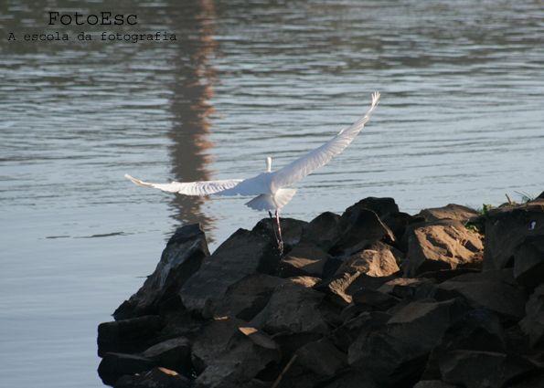 Como fotografar aves em movimento?