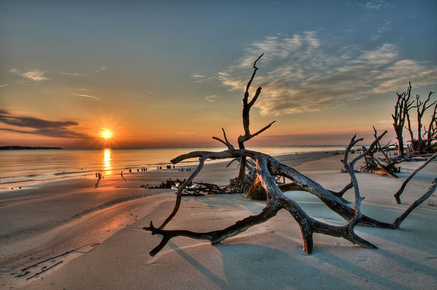 photos of driftwood | Driftwood Beach Photograph | By The