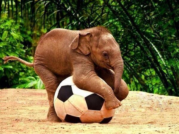 Cra de elefante jugando al ftbol  Animales  Pinterest  Animal
