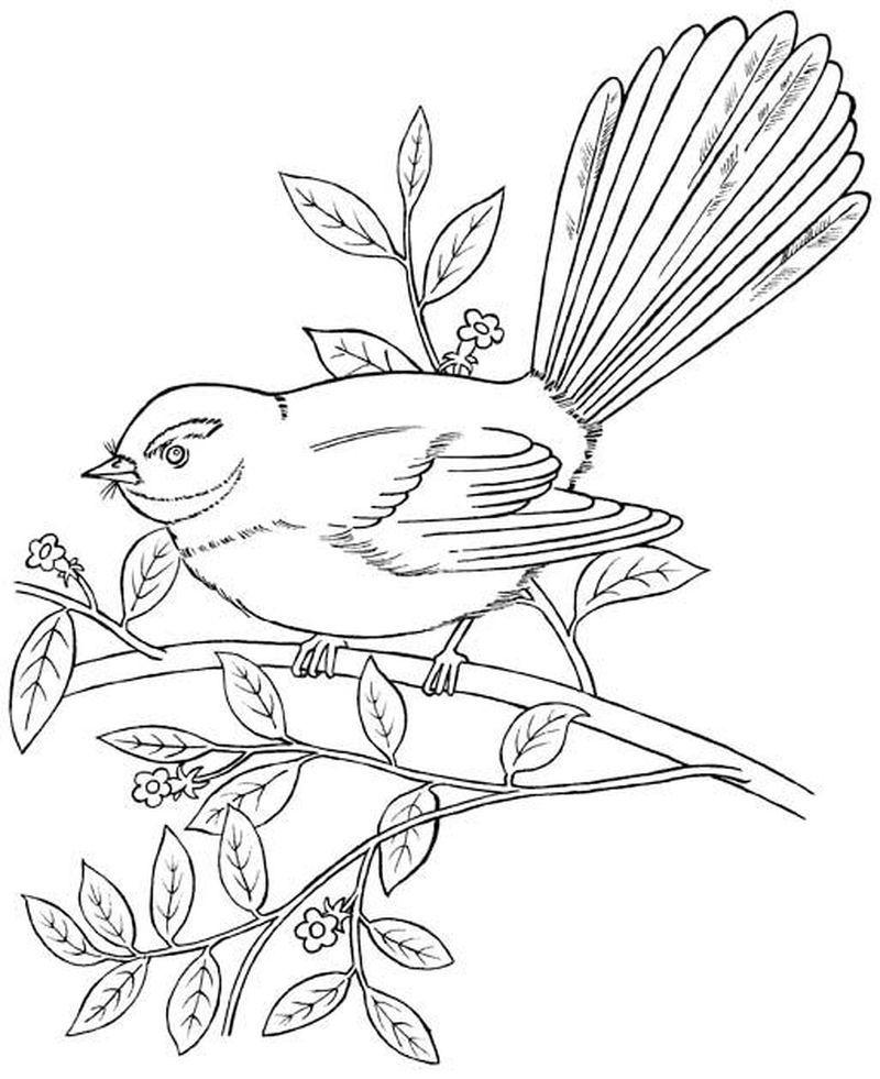 Vögel Ausmalbilder Zum Drucken   Vogel malvorlagen, Vögel ...