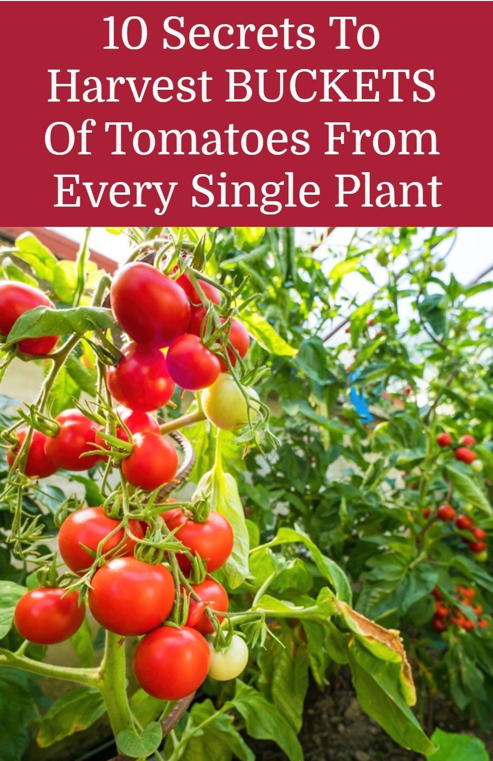 d7f13667e4ac0e65021a720c39cfc982 - Expert Gardener Organics Vegetable & Tomato Food
