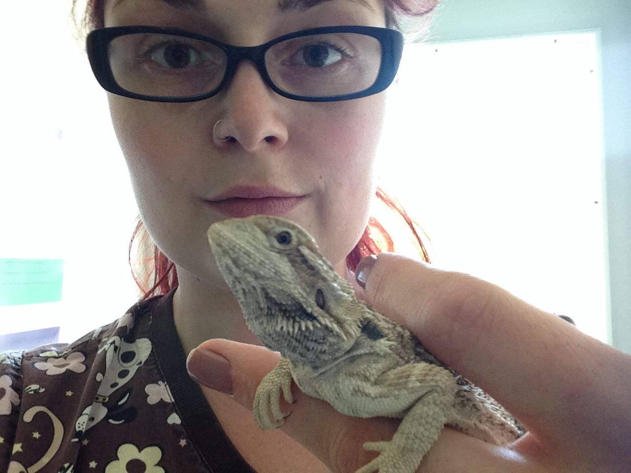 I love bearded dragons. They're relatively easy to care