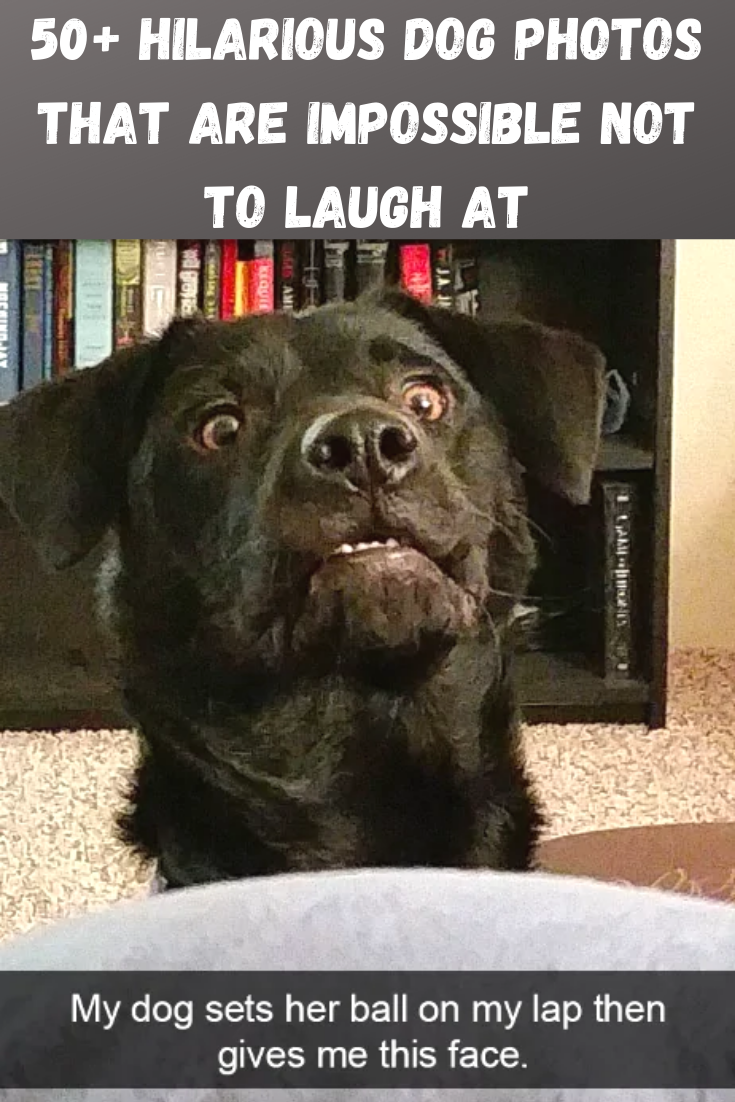 50 Hilarious Dog Photos That Are Impossible Not To Laugh At Dog Quotes Funny Funny Dog Memes Funny Pictures