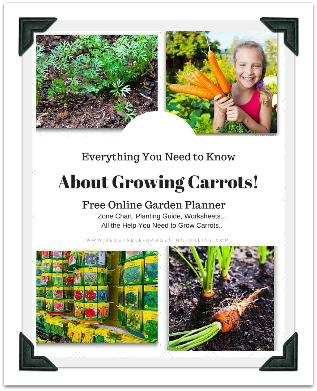 Growing Carrots In Your Garden Is Quite Simple But There