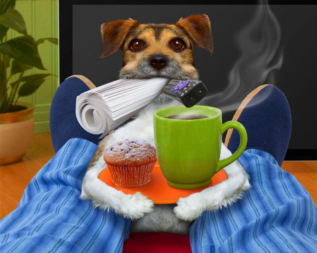 нас собачка с добрым утром картинки организация