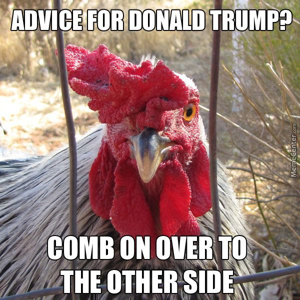 Cocky Advice Rooster Cocky Rooster Advice