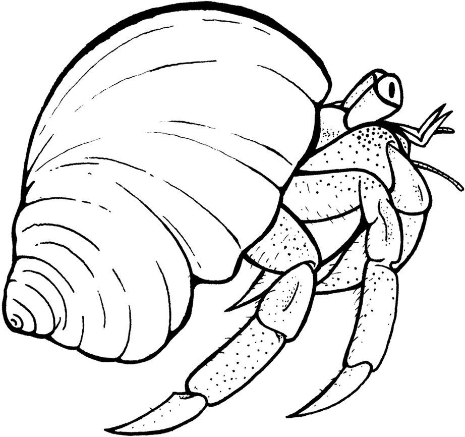 hermit crab coloring page # 0