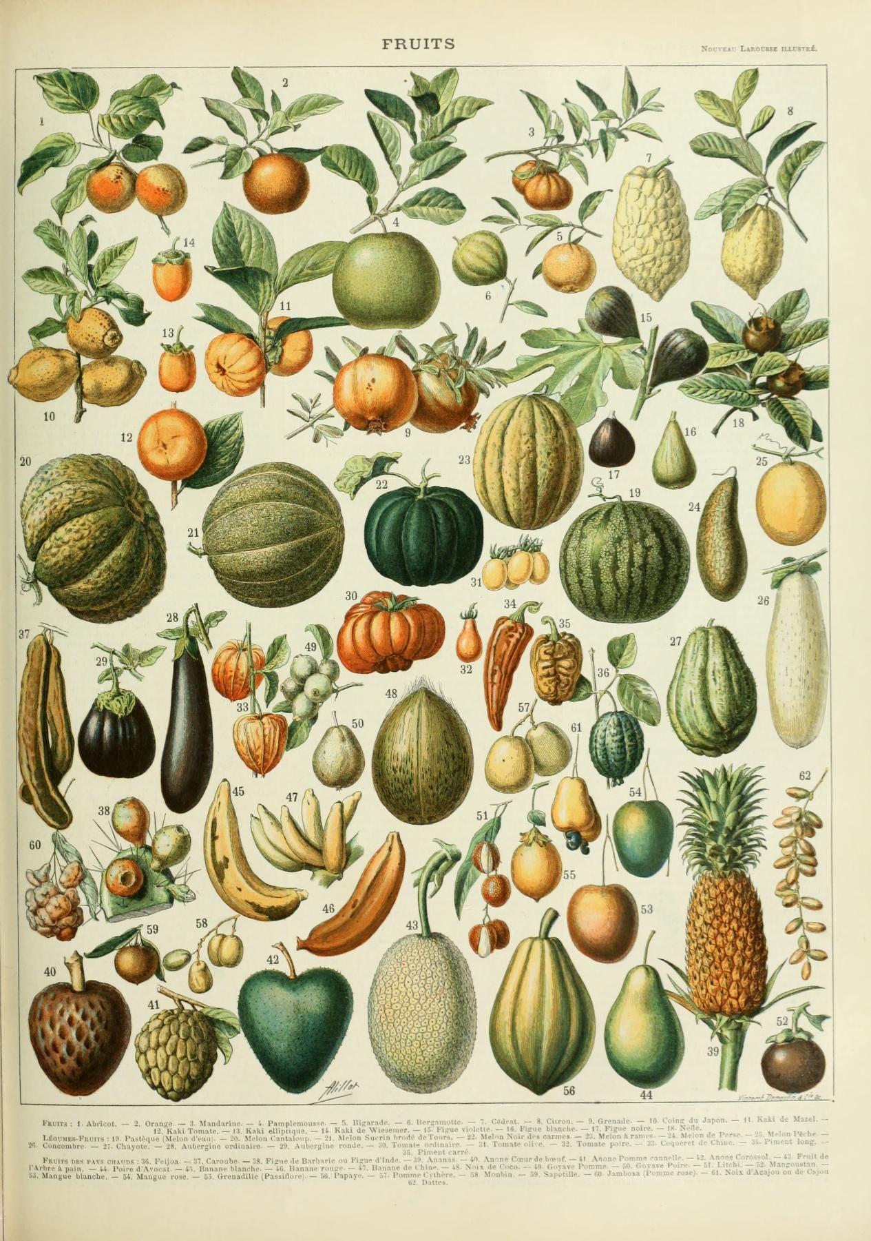 Nouveau Larousse Illustre Fruits With Images Vintage