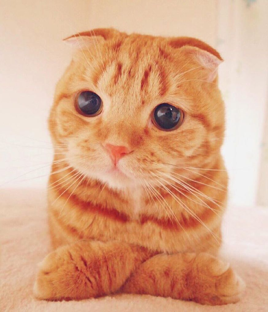 Cute baby animals and pets on instagram check out this