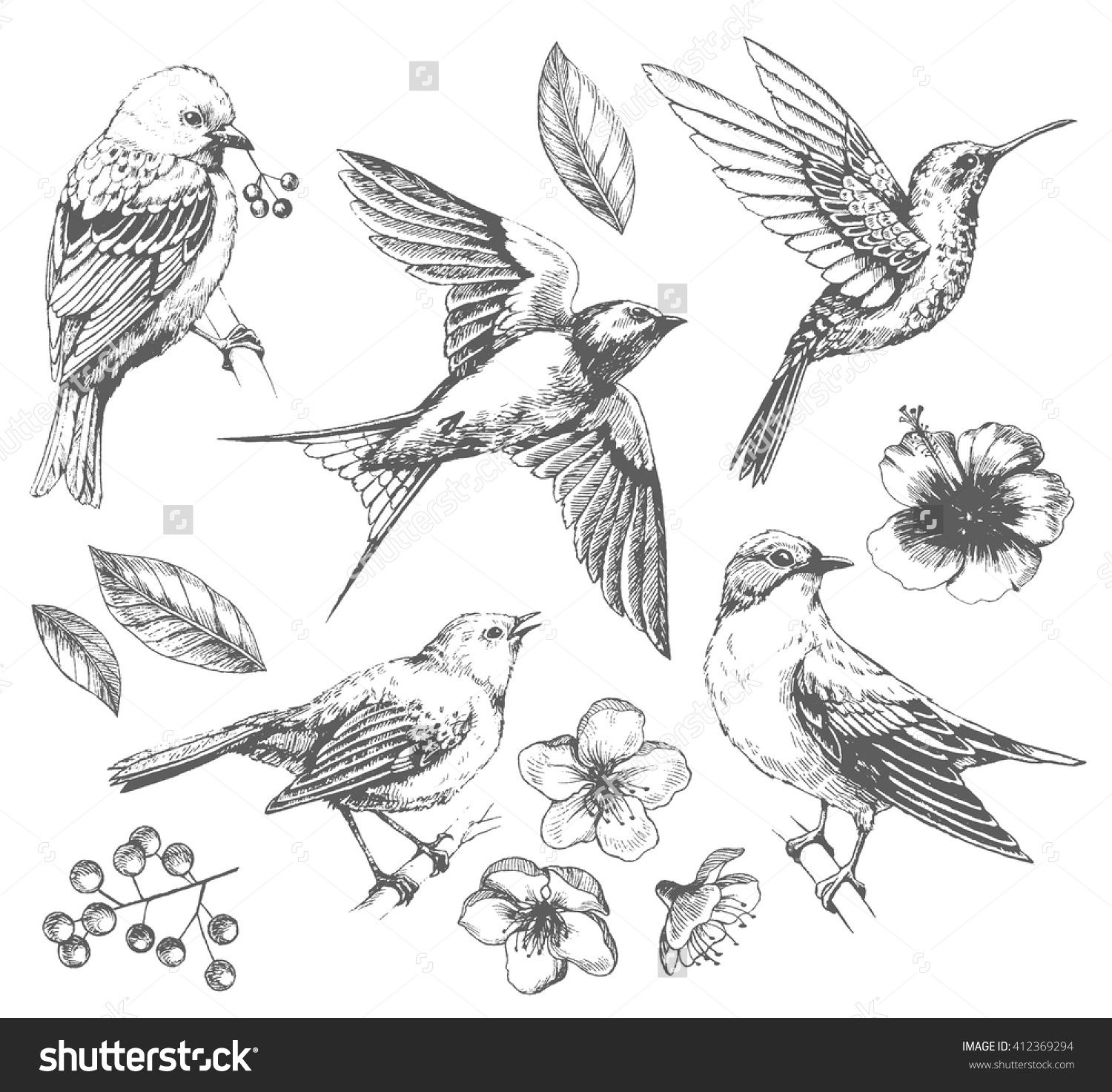 Set Of Of Birds And Flowers Line Drawings Ink Drawing Hand Drawn
