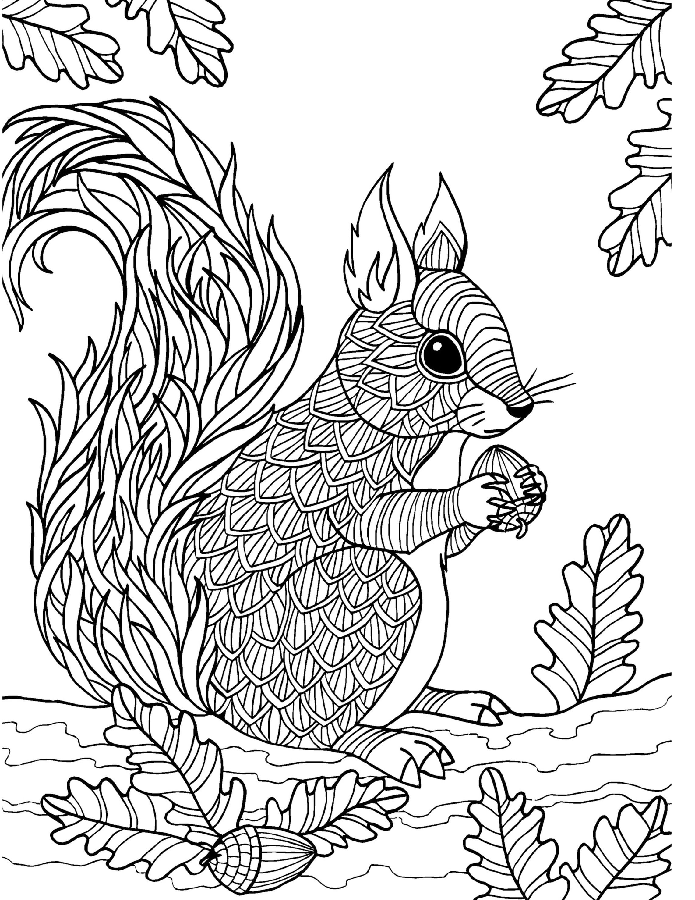 squirrel adult colouring page  colouring in sheets  art