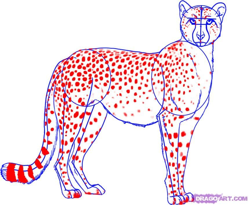 how to draw a cheetah step 5