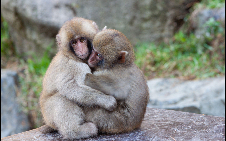гостей ржачные картинки животных пара кун генетически может