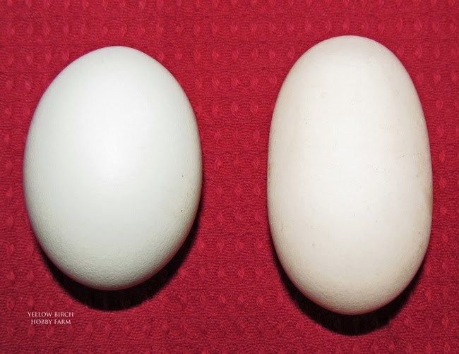 Image result for weirdeggs
