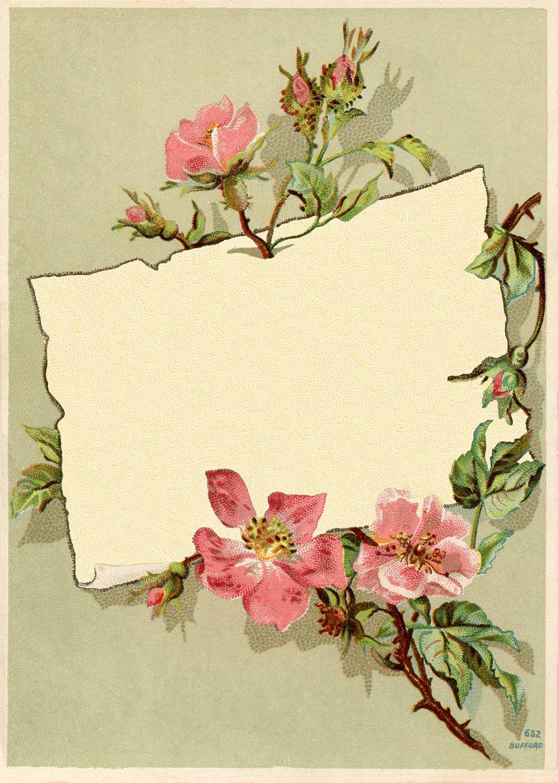 Vintage Rose Frame Images | Vintage borders, Vintage and ...