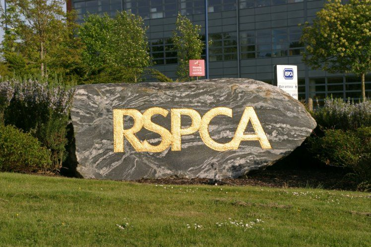Should RSPCA be stopped from prosecuting animal cruelty