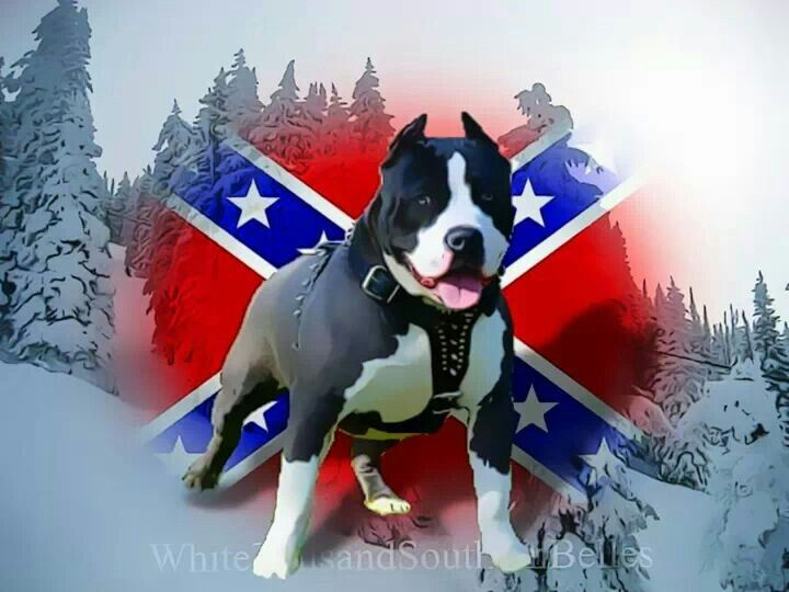 Pin On Pitbull Dogs