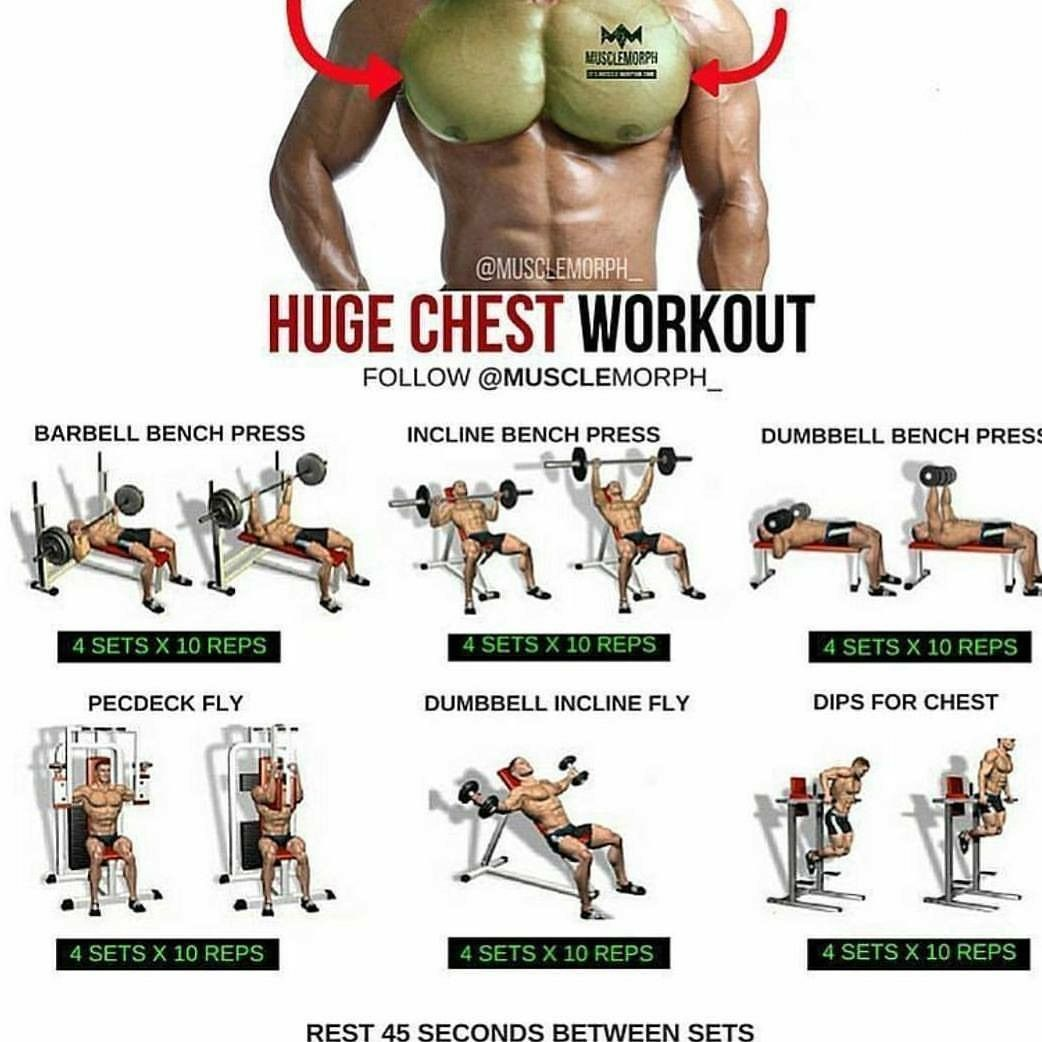 Pectorals (With images) Chest workouts, Ultimate chest
