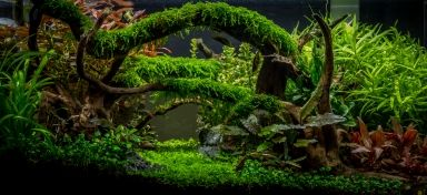 Superior Aquascape Awards Planted Tank: Enchanted Forest By Tommy Vestlie
