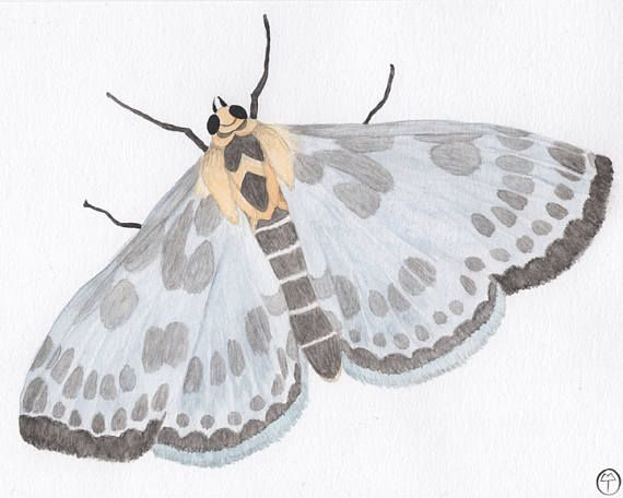 Magpie Moth watercolor  This is an archival print of my original watercolor painting.  The subject is a dusty blue, yellow and grey magpie moth - Anania hortulata.  SIZE: 8X10 inches (20cmX 25cm)  MATERIALS: Pigment inks on 100% cotton, bright white, 210gsm fine art paper which is eco friendly and archival.  SIGNATURE: Teodora Opris printer's chop mark, bottom right.  CARE INSTRUCTIONS: In order to keep your print in great condition it is important to frame with archival materials (mattes…