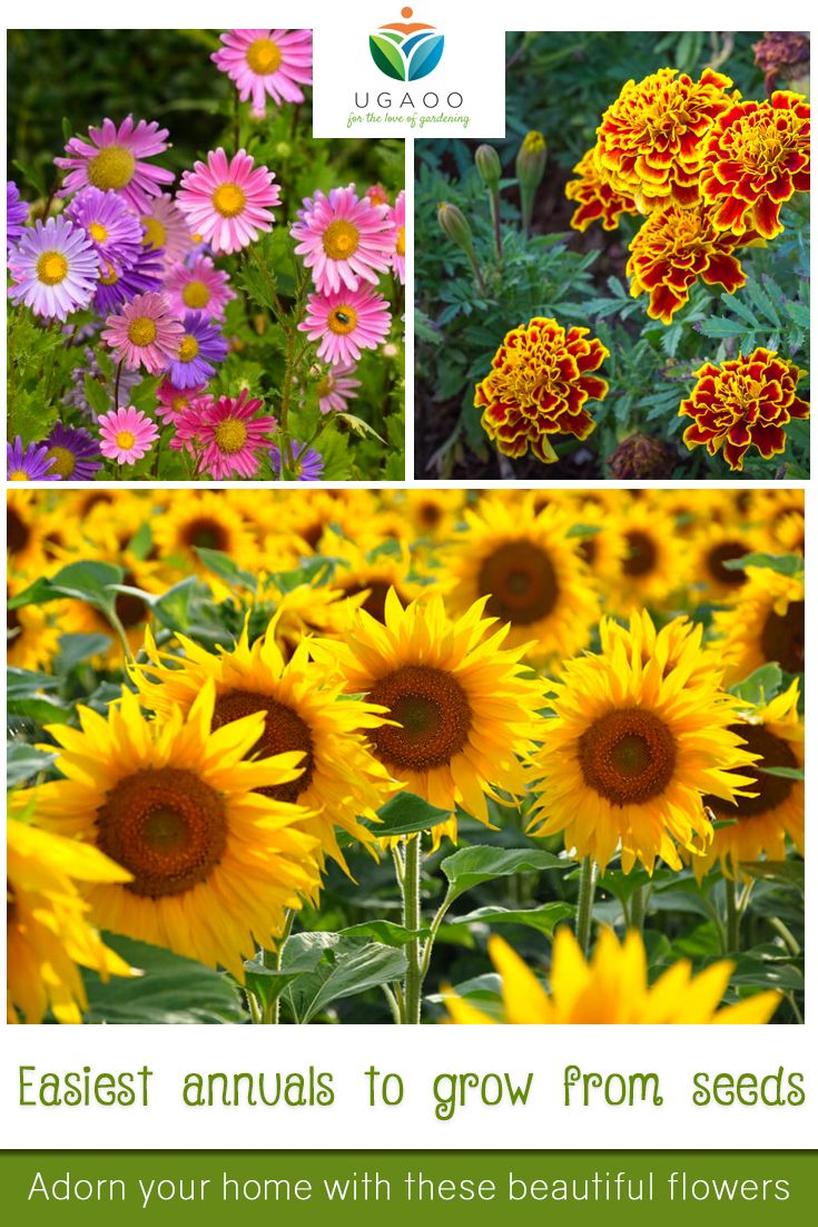 Start These 14 Annuals From Seeds Pinterest Perennials Plants