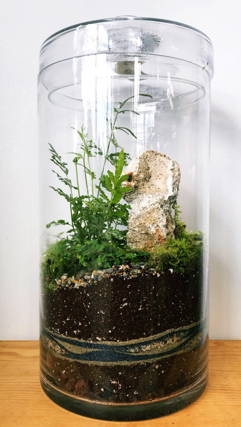Glass Terrarium With Pteris Fern And Sand Art Diy Roosevelts