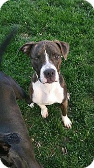 Dayton Oh Boxer Mix Meet Rueben A Dog For Adoption Http Www Adoptapet Com Pet 18035077 Dayton Ohio Boxer Mix Dog Adoption Kitten Adoption Pets